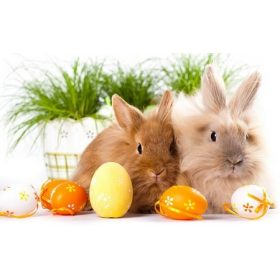 Húsvéti termékek